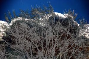 20100304203831 arbre hiver