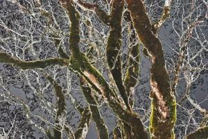 20120420231028 19 arbre hiver 800